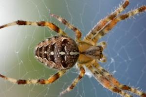A pókoktól