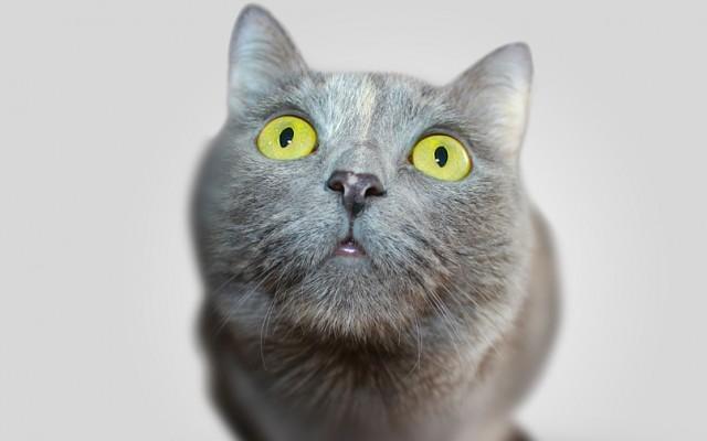 Neked melyik cuki macska, kutya jön be?