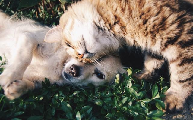 A kutyát vagy a macskát szereted jobban?
