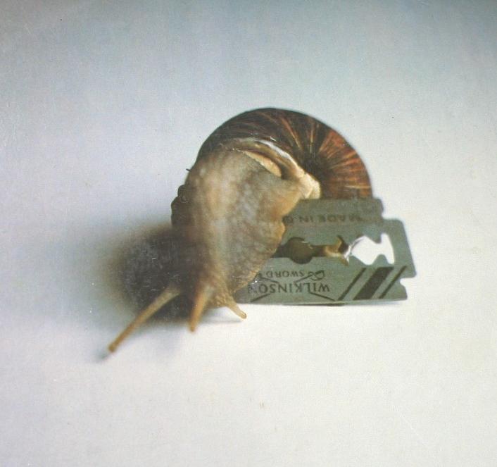 Melyik Neoton Família-lemez borítóképe egy borotvapengén átmászó csiga?