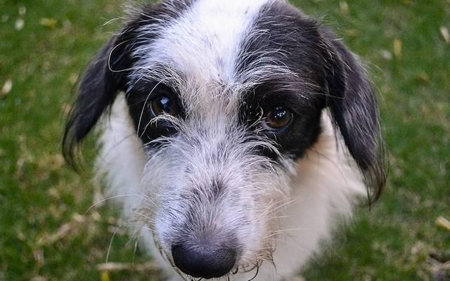 Egy, a Kaliforniai Egyetem által végzett kutatás eredményei szerint féltékenyek lesznek, ha a gazdájuk helyettük egy másik állatot vagy egy embert szeretget.