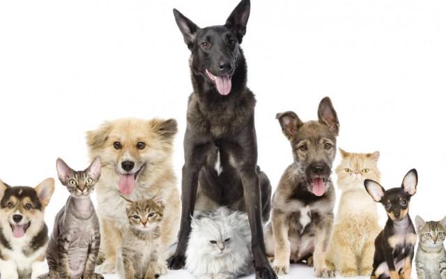 Kutya- és macskabarátok! Mennyi érdekességet tudtok kedvenceitekről?