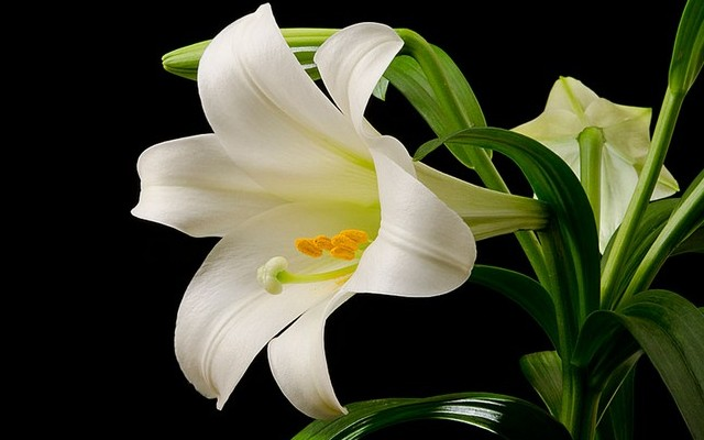 Felismered milyen virág ez?