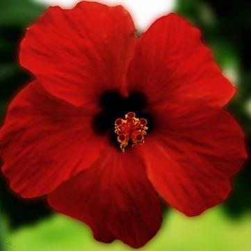 Az alábbi képek közül válaszd ki a rózsát!