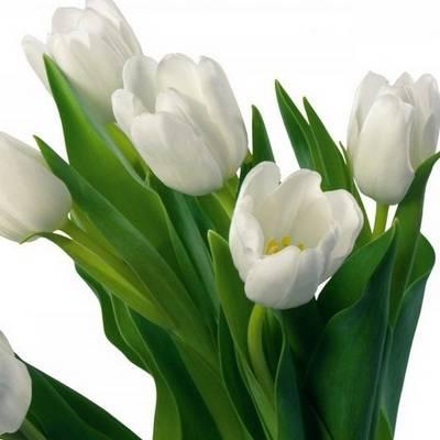 Az alábbiak közül válaszd ki a tulipánt!