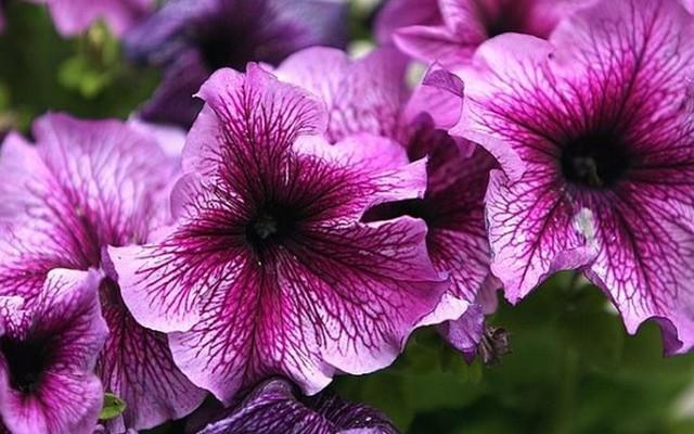 Milyen virág ez?