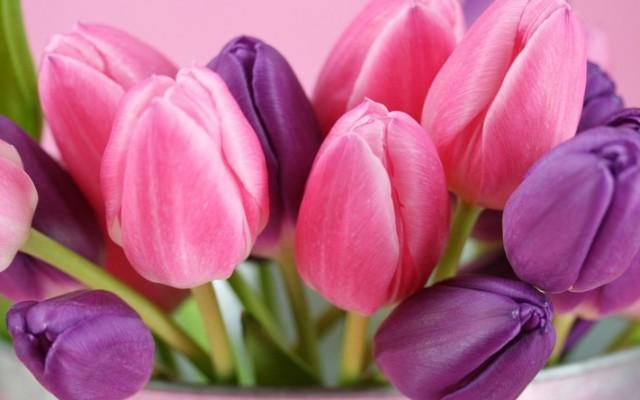 Mennyire ismered a virágokat? Felismered milyen virág ez?