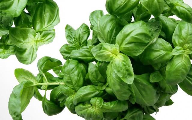 Fűszernövények: mindegyiket egyből felismered?