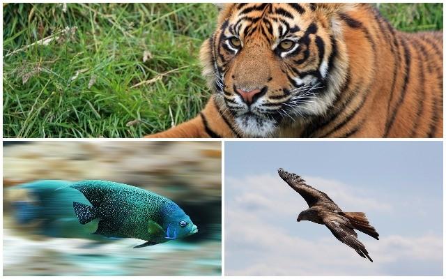 Válassz egy állatot!