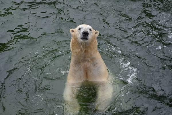 Hol él jegesmedve?