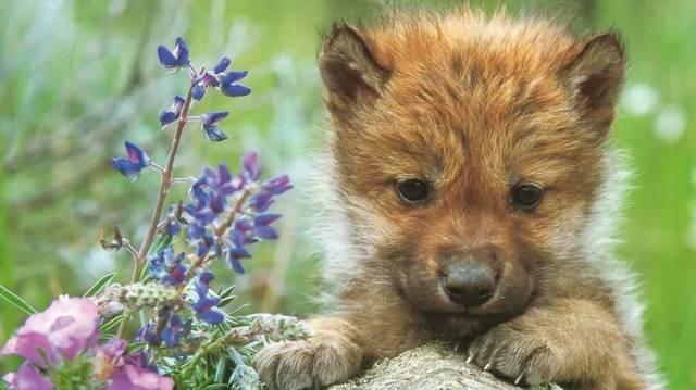 Melyik állat kölyke ez?