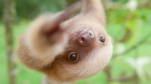 Melyik állat kicsinye ez?
