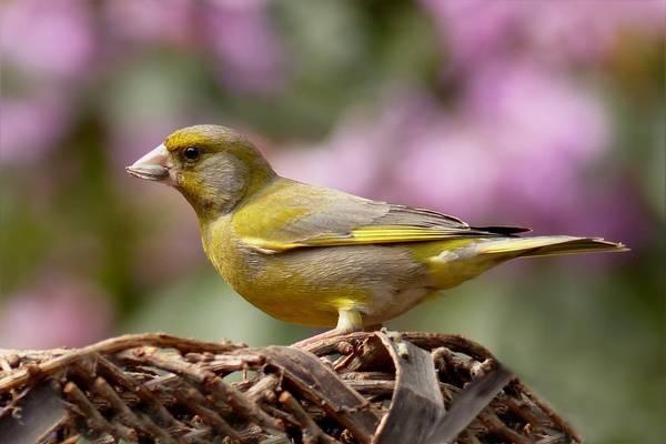 Melyik ez a madár?