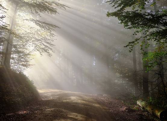 Az ország területének hány százalékát borítja erdő?