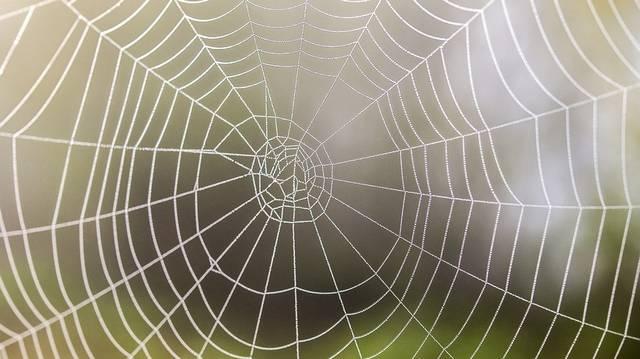 Hány lába van a pókszabásúaknak?