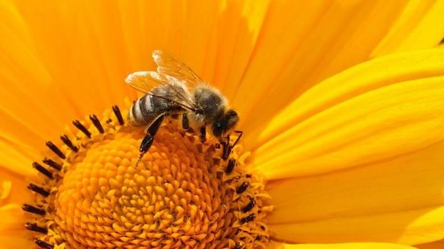 Hogy hívják a méhek lárváit?
