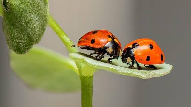 Hány lába van a rovaroknak?