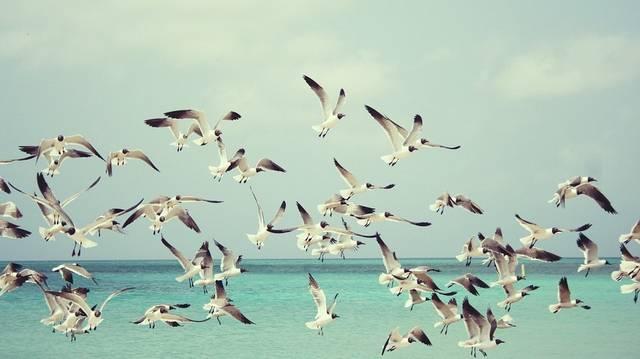 Hány lábujja van a madaraknak?