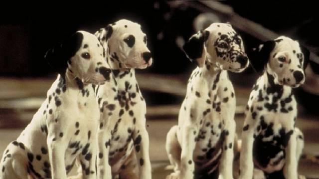 101 kiskutya - Hogy hívták a két főszereplő kutyát?
