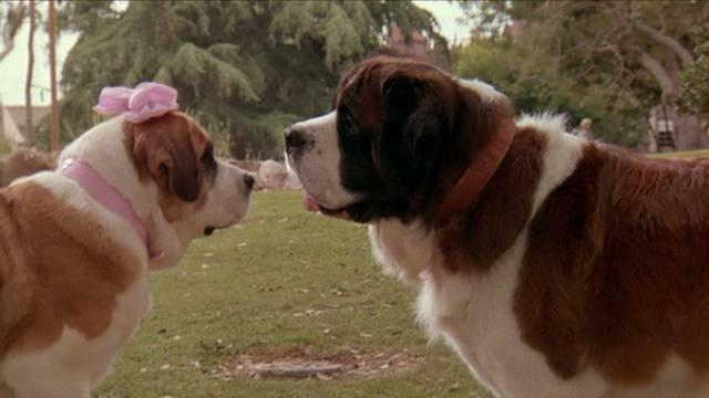 Egy bernáthegyi kiskutya a Newton családhoz kerül, de a családfő nem örül a változásnak. Mi a film címe?