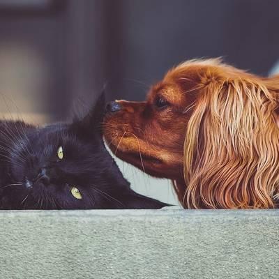 Egyedül vagyok, de van kutyám/macskám
