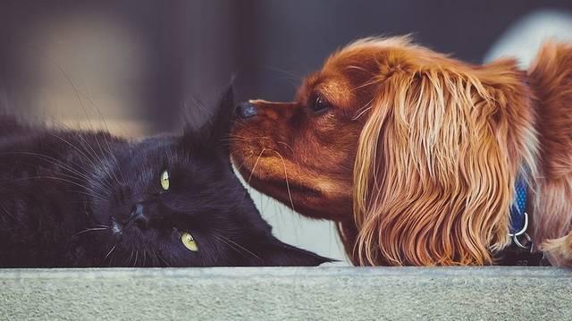 Szereted az állatokat?