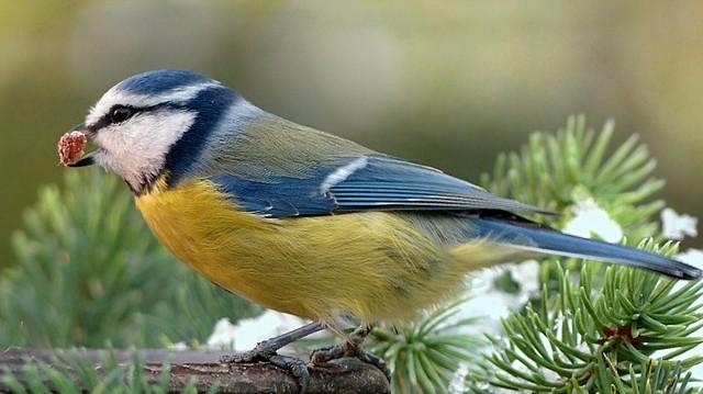 A felsoroltak közül, melyik állat NEM alszik téli álmot?