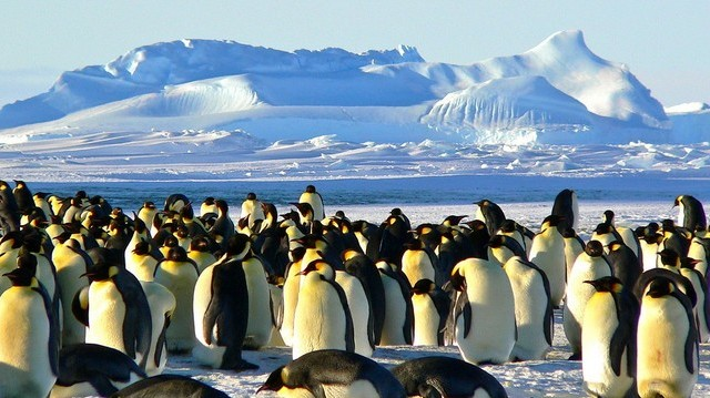 Hol élnek a pingvinek?