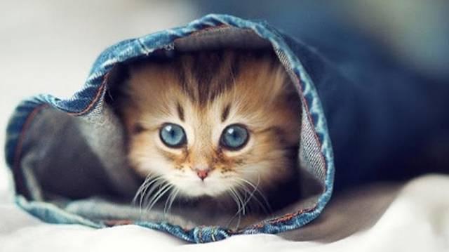 Átlagosan mennyit alszanak a macskák naponta?