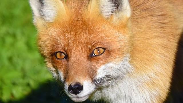 Mi célt szolgál az állatok szőre az alábbiak közül?