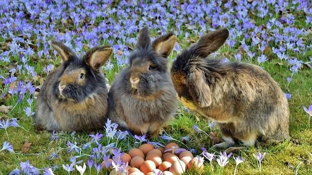 Mi a húsvét tartalma, jelentése?