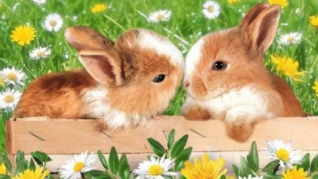 A tavaszi napéjegyenlőséget (március 21.) követő holdtölte utáni első vasárnap tartjuk ezt az ünnepet. Melyiket?