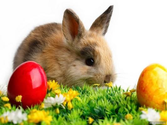 Honnan ered a húsvéti nyúl, mint jelkép?