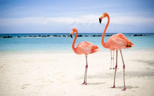 Hány évig élhet egy flamingó?