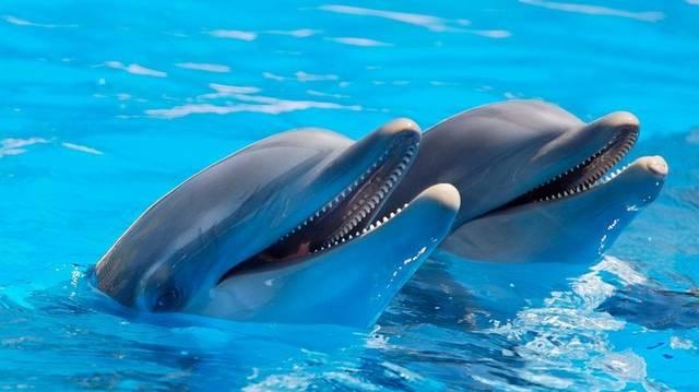 Mi alapján tájékozódik a delfin?