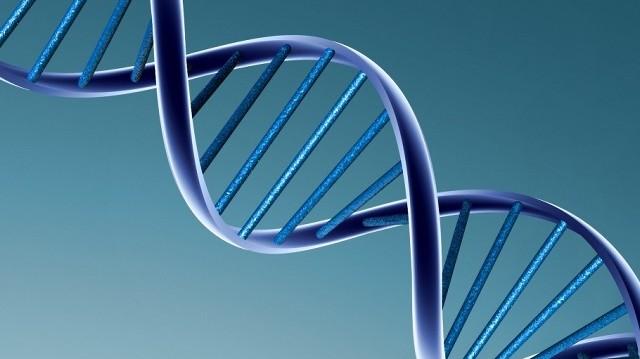 Minek a rövidítése a DNS?