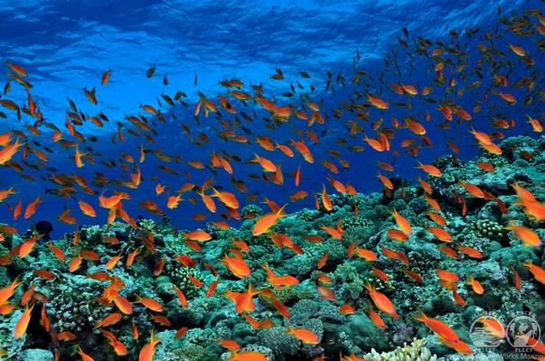 Afrika és az Arab-félsziget között található tenger. Melyik az?