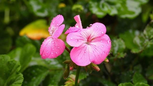 Mit ér a májusi eső?