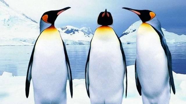 Pingvin. Szinte kizárólag a Föld déli féltekéjén élnek, Többnyire Dél-Amerika mérsékelt övi partvidékén és a környező szigeteken. Két fajuk az Antarktisz partvidékén telepedett meg. (Wikipédia)