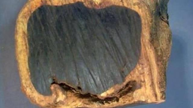 Melyik fa fekete színű?