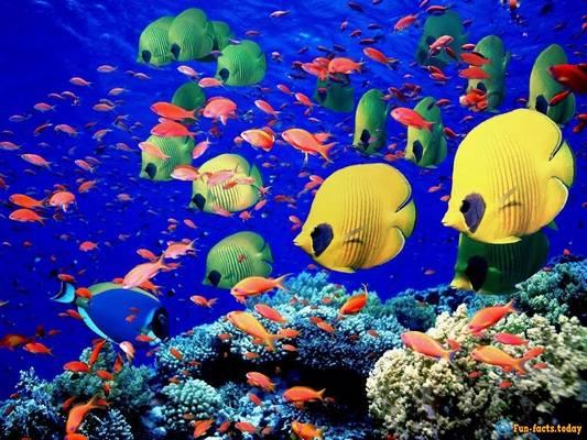 Melyik halunkat nevezik fogasnak is?