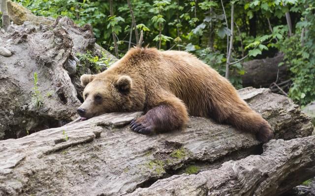 Mi sem maradunk ki az őrületből: itt a nagy medvés kvíz