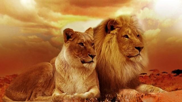 Mi más lenne, mint az oroszlán!