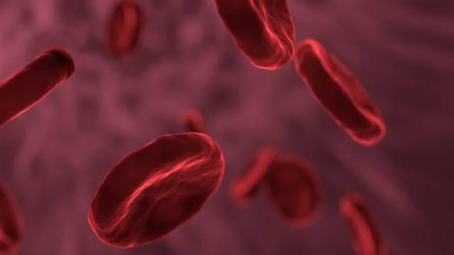 Tényleg kicserélődnek (megújulnak) az ember sejtjei hétévenként?