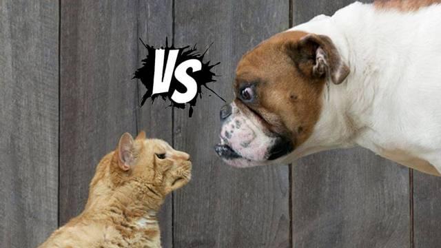 Azt látod, hogy egy vad és veszett gazdátlan kutya megtámad egy gazdátlan kiscicát, akinek még a szeme sem nyílt ki, így nem tud elmenekülni. Mit teszel?