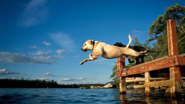 A kutyád sétáltatás közben elszabadul és beleszökik egy 5 méter mélységű tóba. Ő fuldoklik, telefon nincs nálad. Mit teszel?