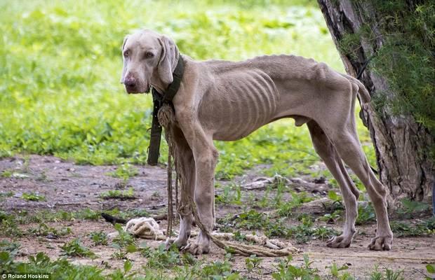 Sétálsz az úton és meglátsz egy sovány, éhes kutyát, akinek nincs gazdája, se kajája. Mit teszel?