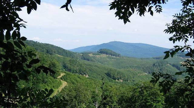 Hol található Magyarország egyetlen őserdeje? (A fotó segíthet!)
