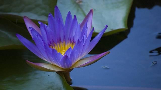 A Hévízi gyógytó a világ legnagyobb biológiailag aktív, természetes termáltava. Befagy-e télen a Hévízi tó?
