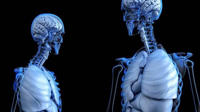 Mik kötik össze a csontváz elemeit?